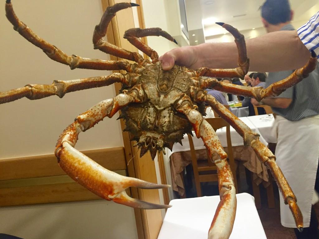 Spider crab at Marisqueira de Matosinhos